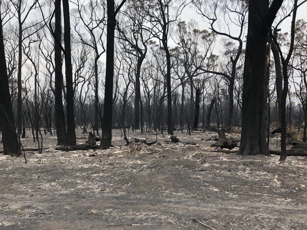 Сгоревший лес в Австралии