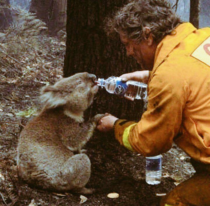 Коалы, кенгуру и миллионы других животных стали жертвами огня