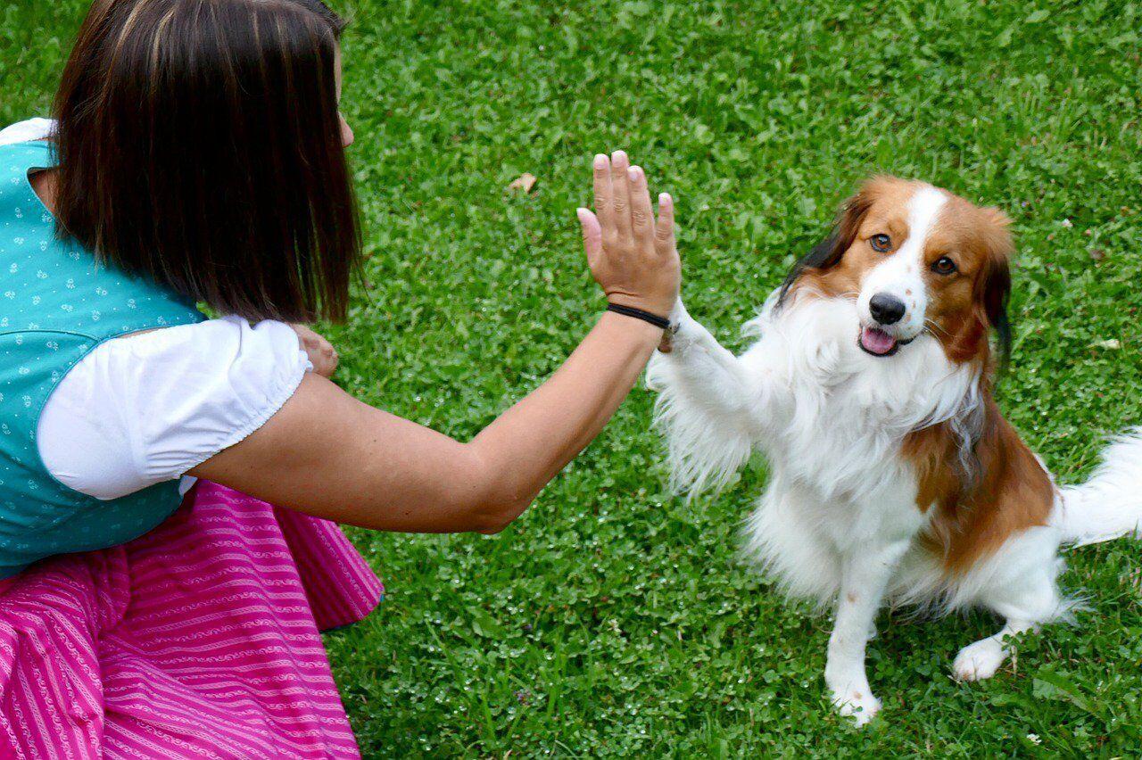 Всемирный день защиты животных: когда отмечают. nat-geo.ru