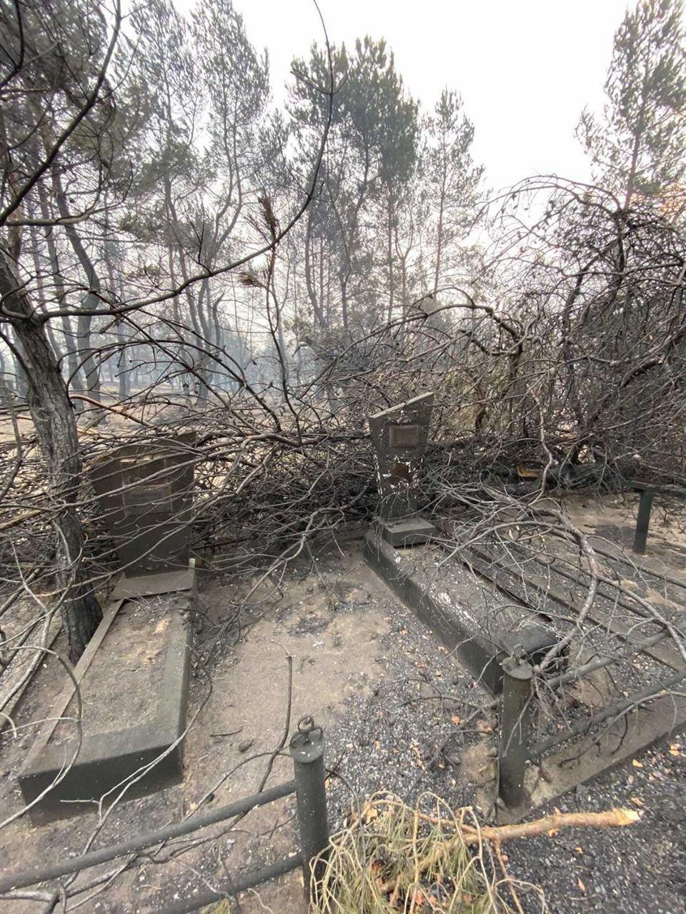 Вогонь викликав обвалення дерев.