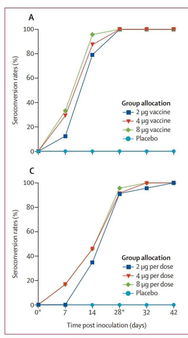 Графік зростання антитіл до коронавірусу в добровольців, які отримали вакцину від Sinopharm