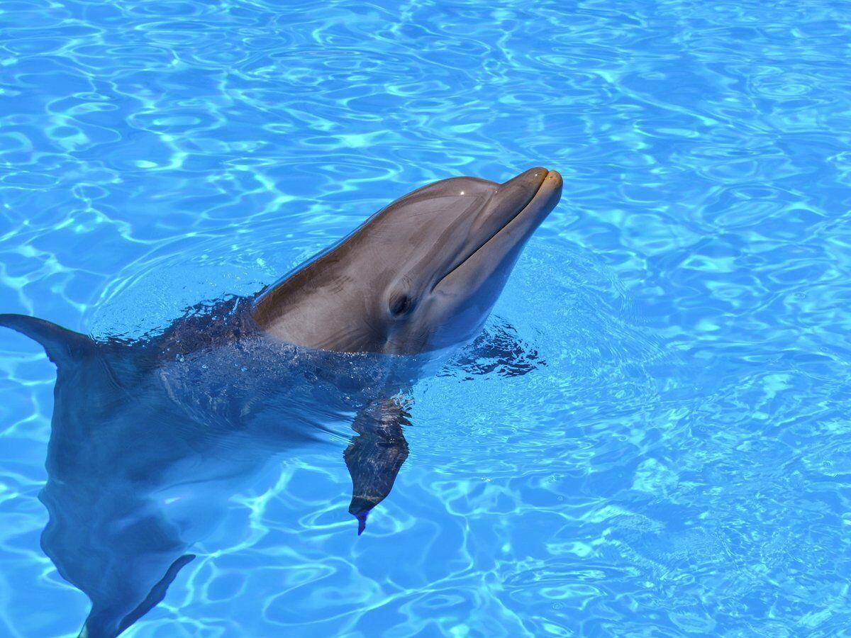 Коштує такий дельфін від 3 до 5 мільйонів доларів.