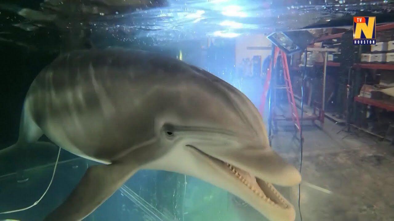 Робот-дельфін важить приблизно 250 кг