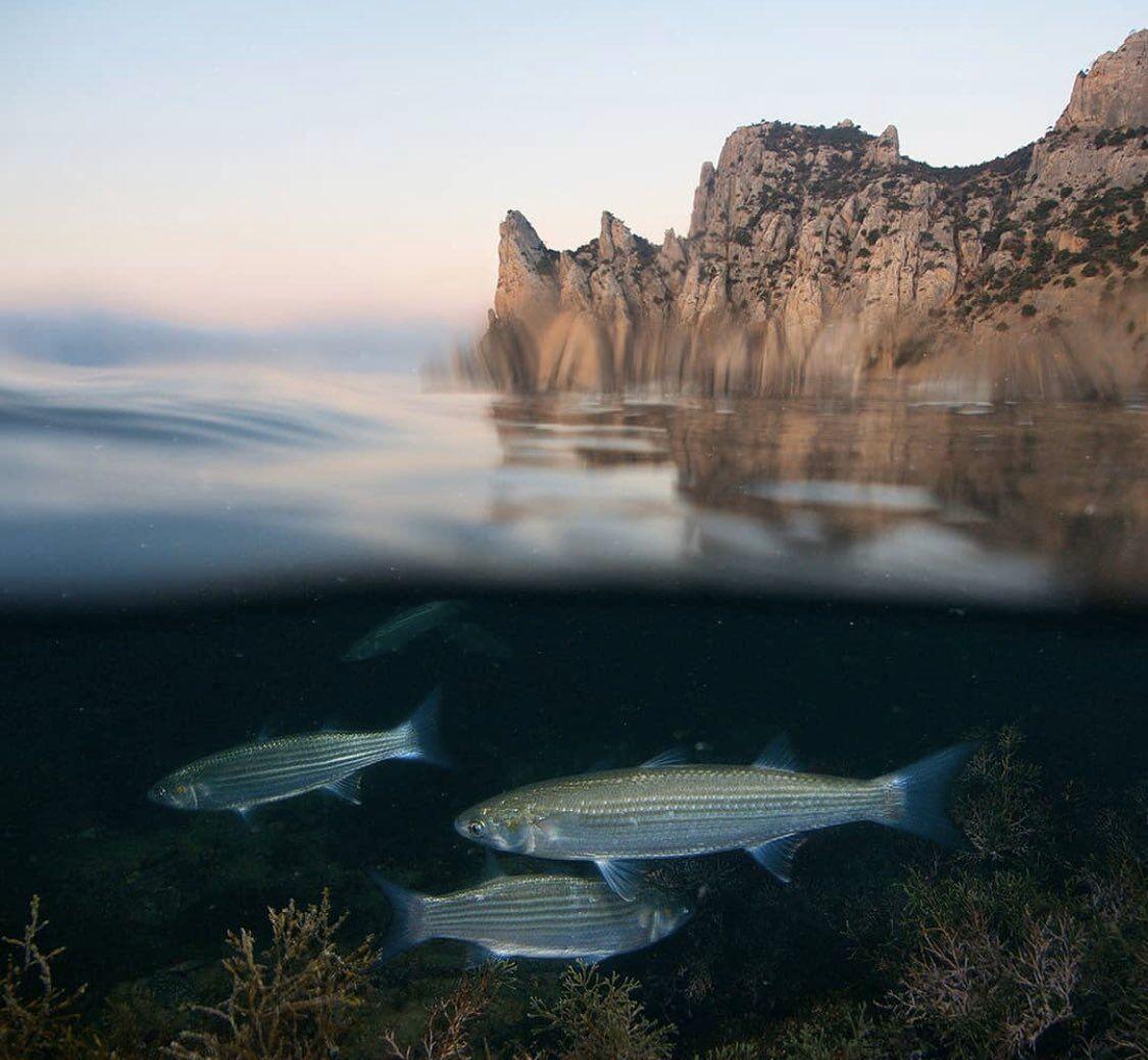 Фото подводного мира Крыма, опубликованного представителями РФ