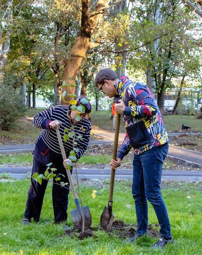 В Днепре более 5000 молодых деревьев высадят на придомовых территориях жилых домов
