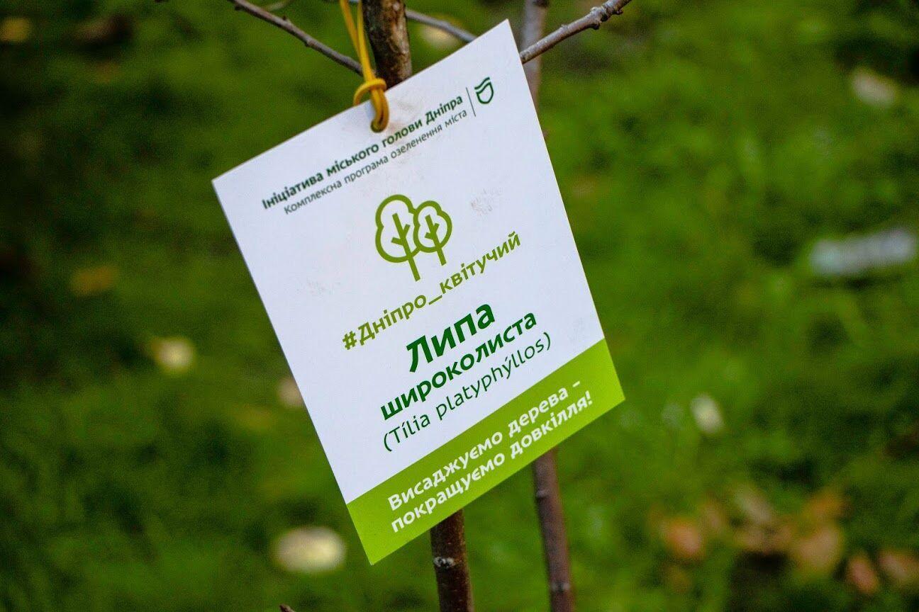 Высадили такие породы деревьев, как клены, липы и рябины.