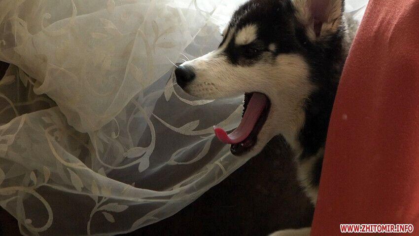 Собаку забрали на обследование.