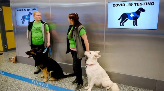 """Собаки """"вынюхивают"""" коронавирус у пассажиров в аэропортах"""