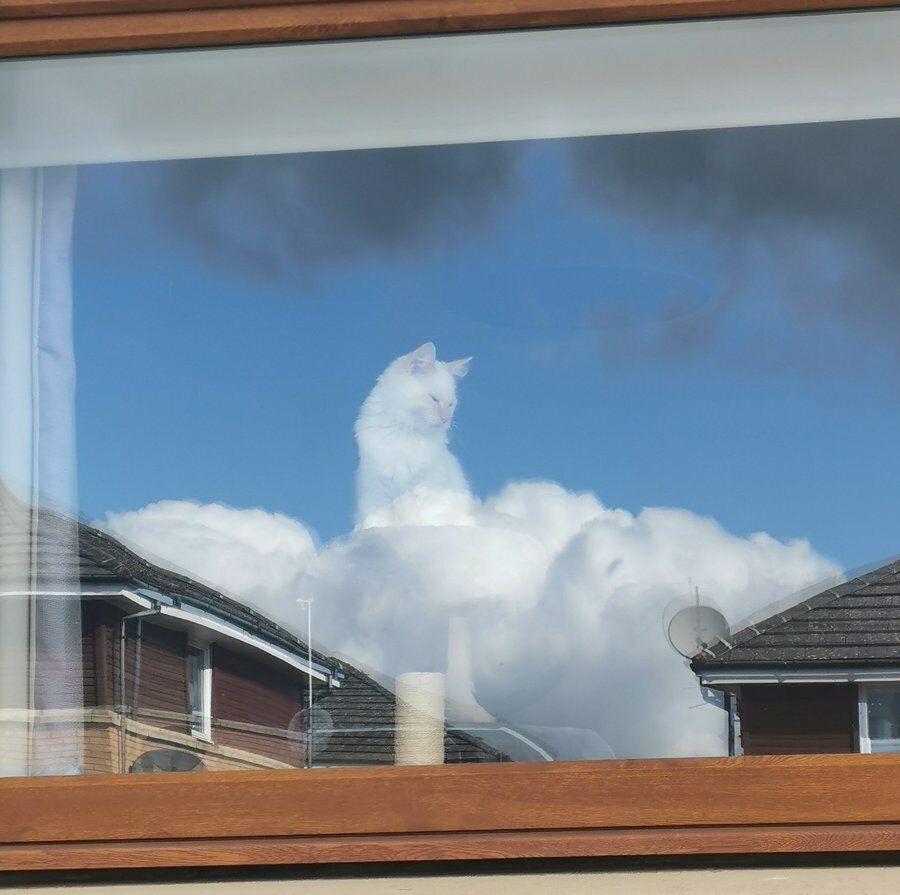 Фото кота на хмарі стало вірусним у мережі.