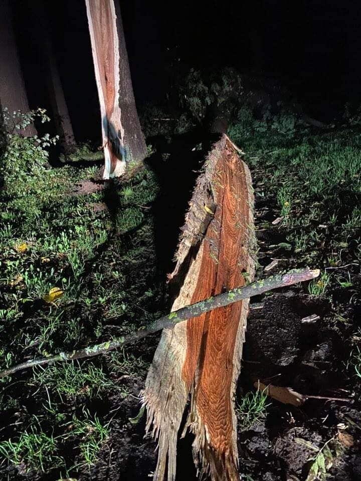 Поваленное дерево в парке.