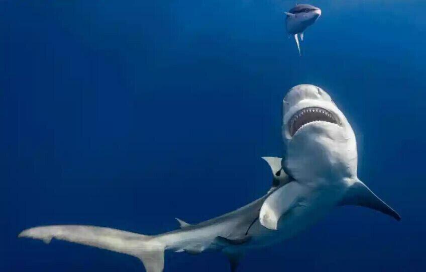Акула біля узбережжя Флориди, США. Фото: Таннер Менселл