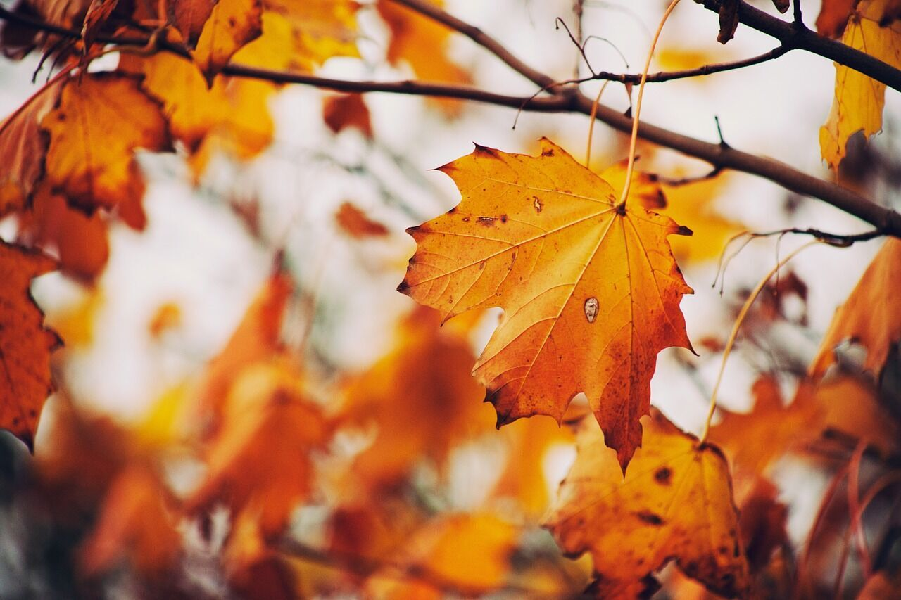 14 ноября наши предки отмечали очередные проводы осени