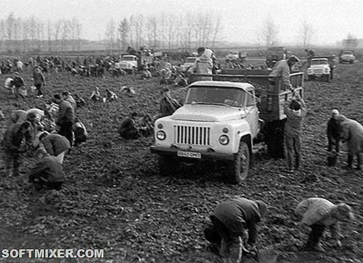 Пользователи вспомнили, как в школьные годы их принуждали работать в колхозе