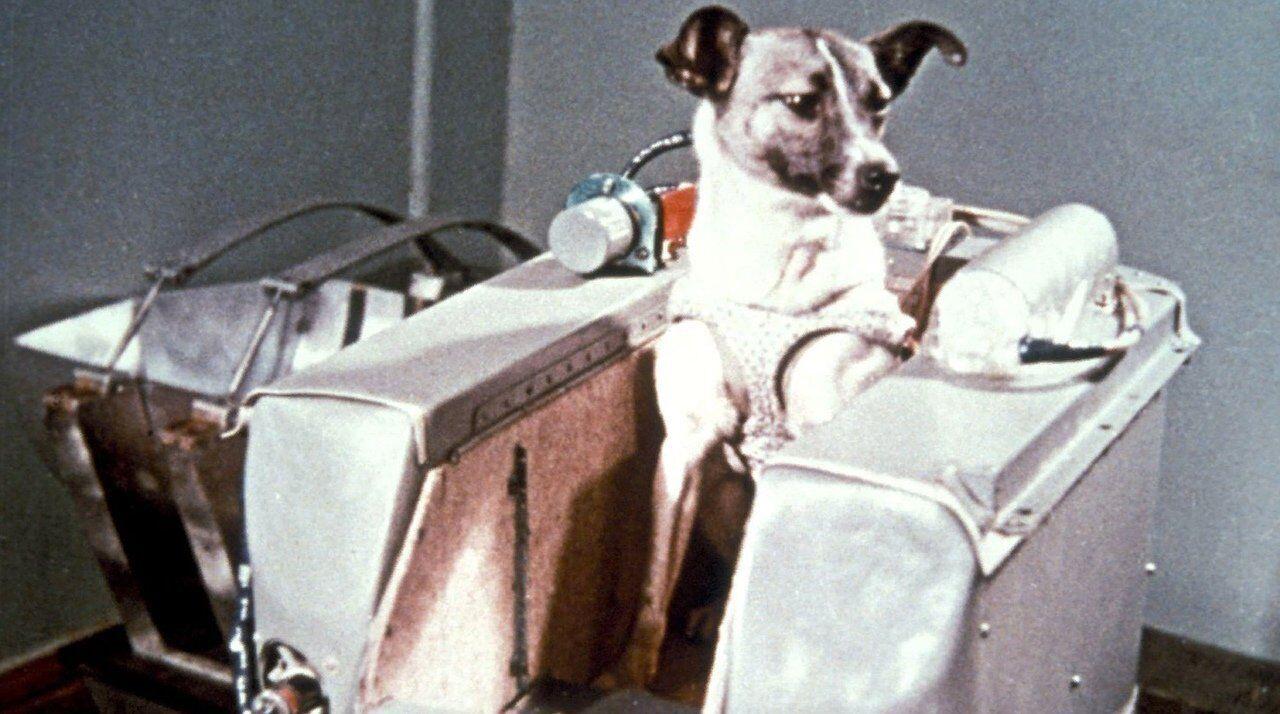 Лайку запустили в космос 3 листопада 1957 року з нового космодрому Тюратам