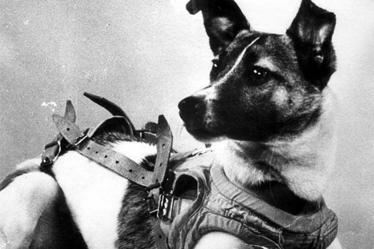 Собака Лайка з СРСР стала першою твариною-космонавтом