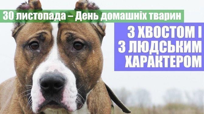 Картинка в День домашних животных