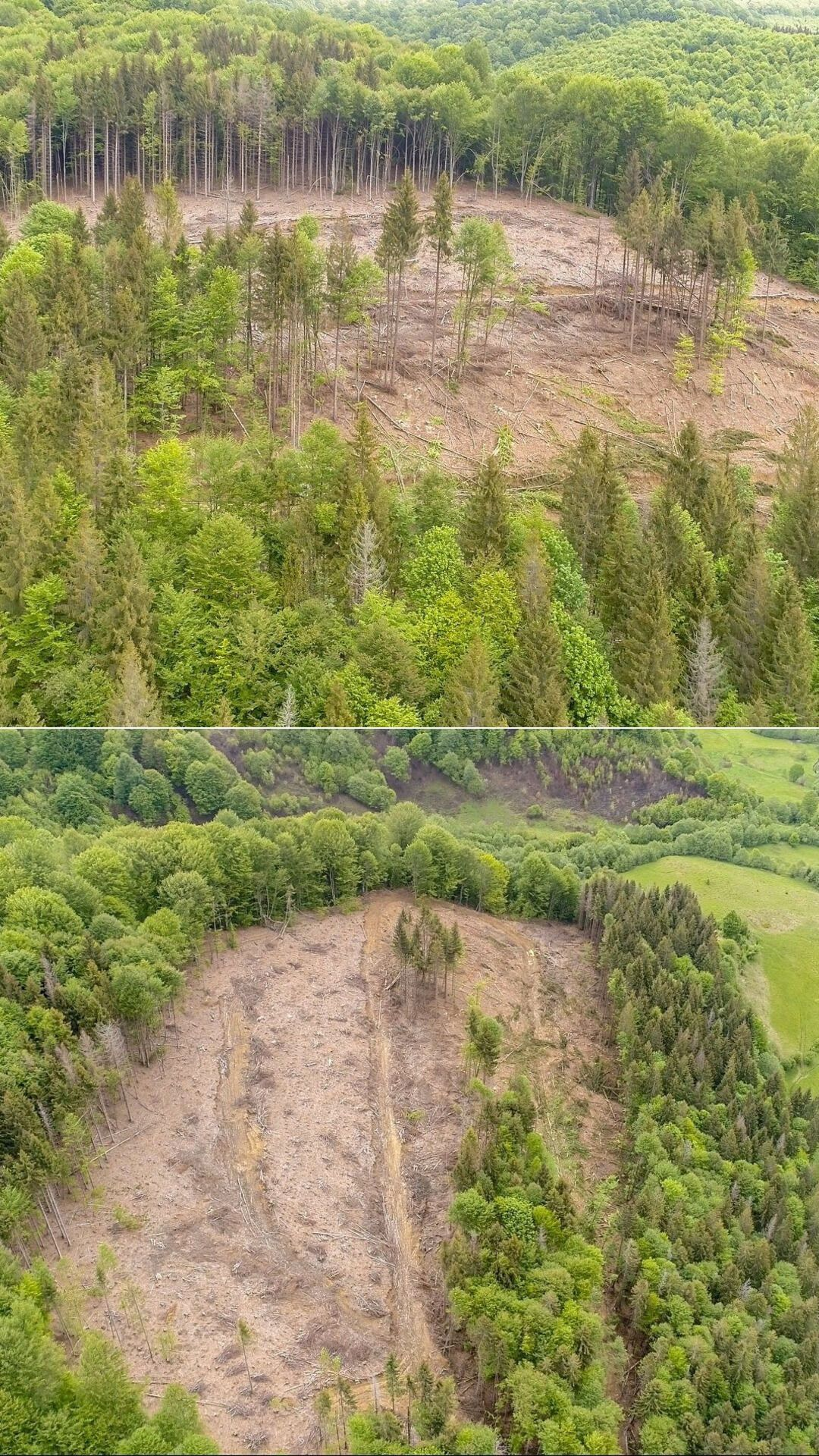 Вирубування лісу в Карпатах