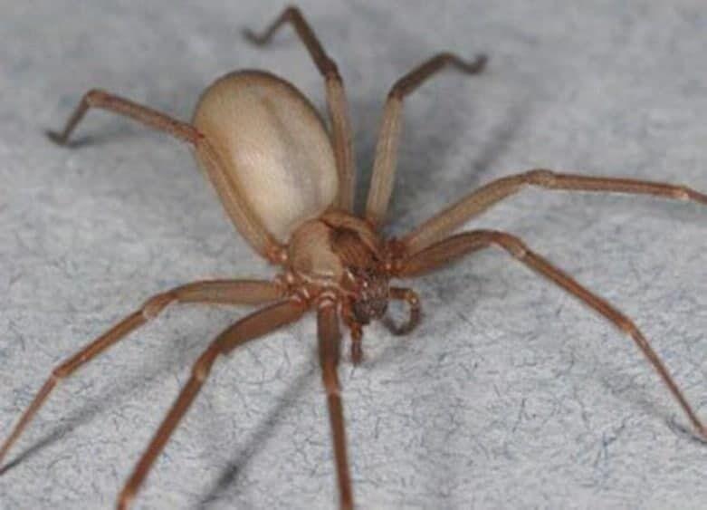 Мужчину укусил паук