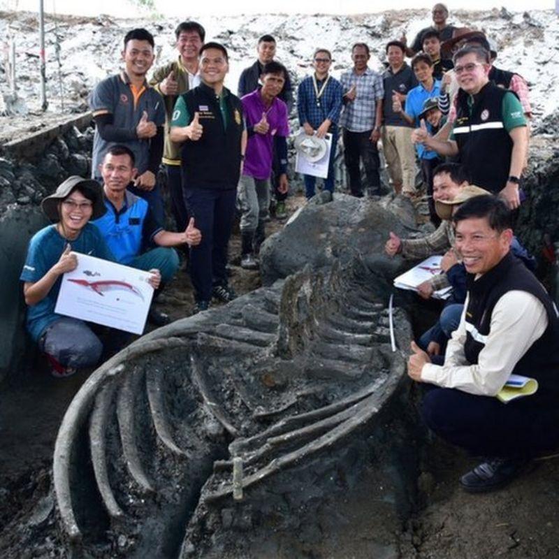 Находка вызвала огромный интерес в Таиланде