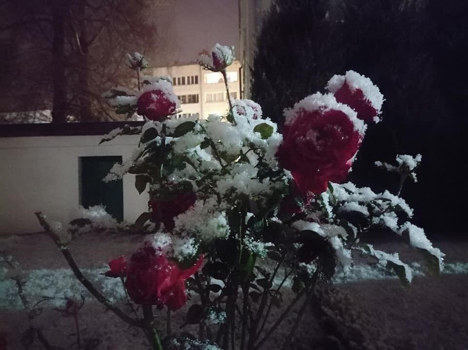 Жители Луцка делятся фото первого снега