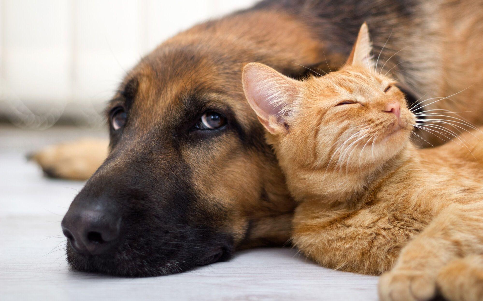 Всемирный день домашних животных: когда отмечают