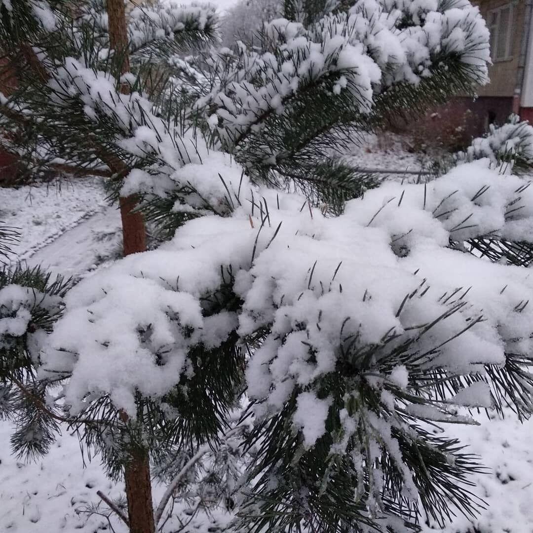 Первый снег во Львове