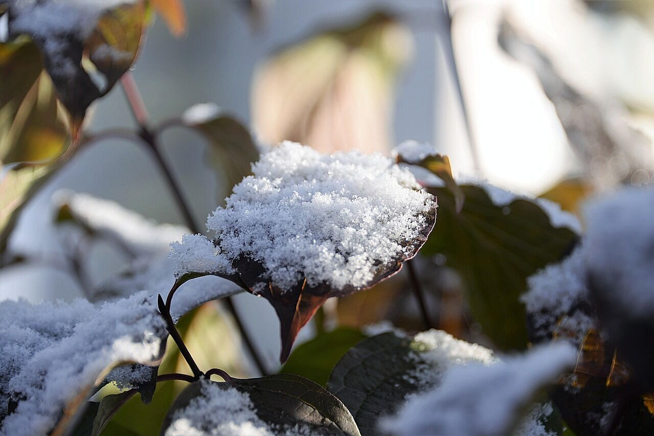 Дмитриев день снежный и морозный – такой же будет весна