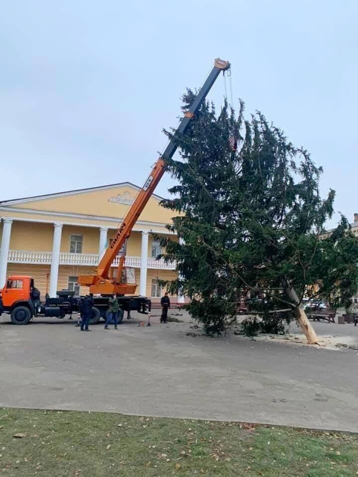 У Дубні встановили 25-метрову ялинку