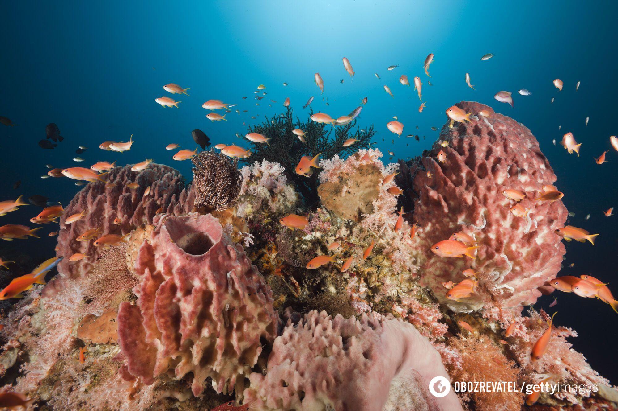 Морские губки – самый дальний родственник человека