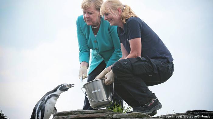 Ангела Меркель годує пінгвінів у своєму виборчому окрузі в землі Мекленбург – Передня Померанія, серпень 2019 року
