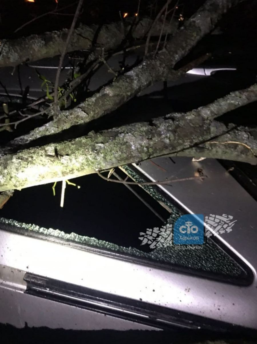 Авто слетело с дороги в лесополосу