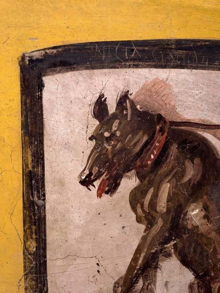 На собаці жартівник намалював гомофобну образу