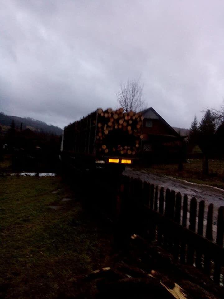 Машина, загруженная срубленными деревьями