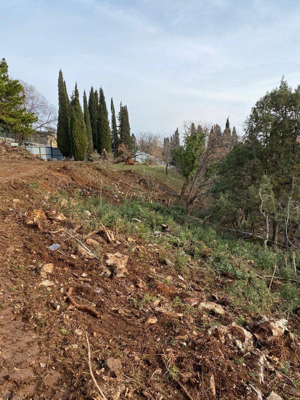 Вирубали дерева під будівництво в одному з дворів Ялти