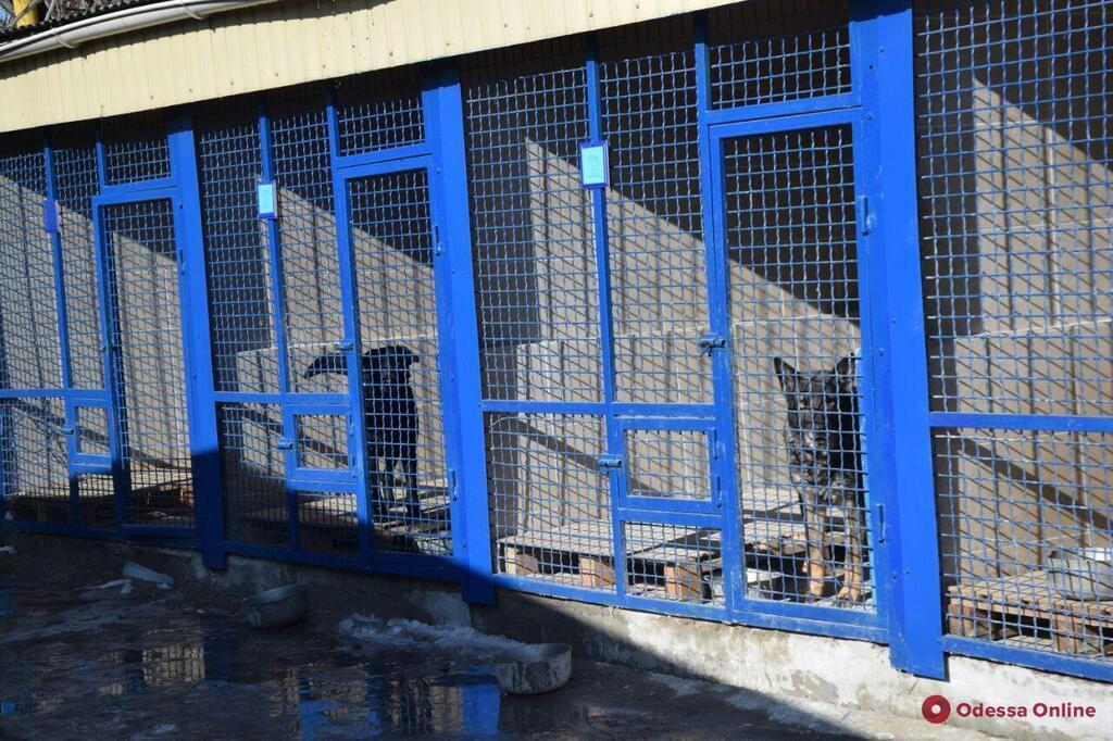В Одесі відкрили центр чотириногих поліцейських