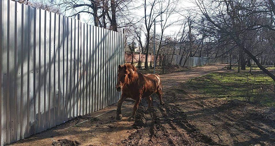 Із зоопарку Одеси втік вибагливий кінь