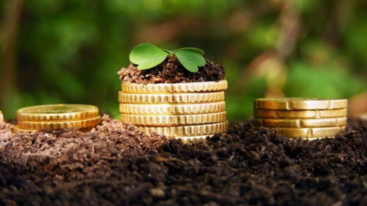 Ринок землі в Україні: названо проблему для запуску