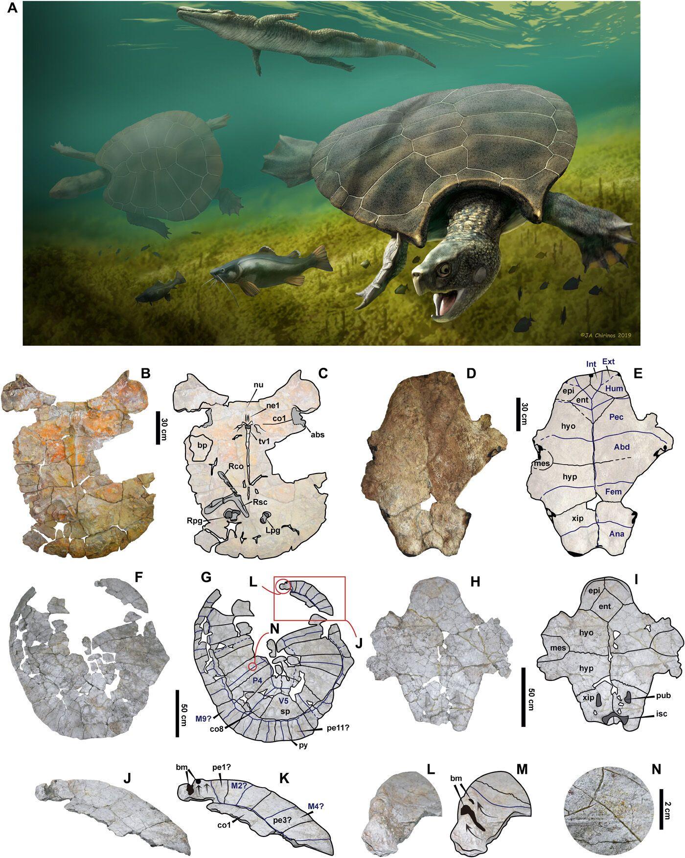 В Южной Америке нашли останки черепах поразительных размеров