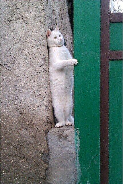 Оригинал фото с белым котом