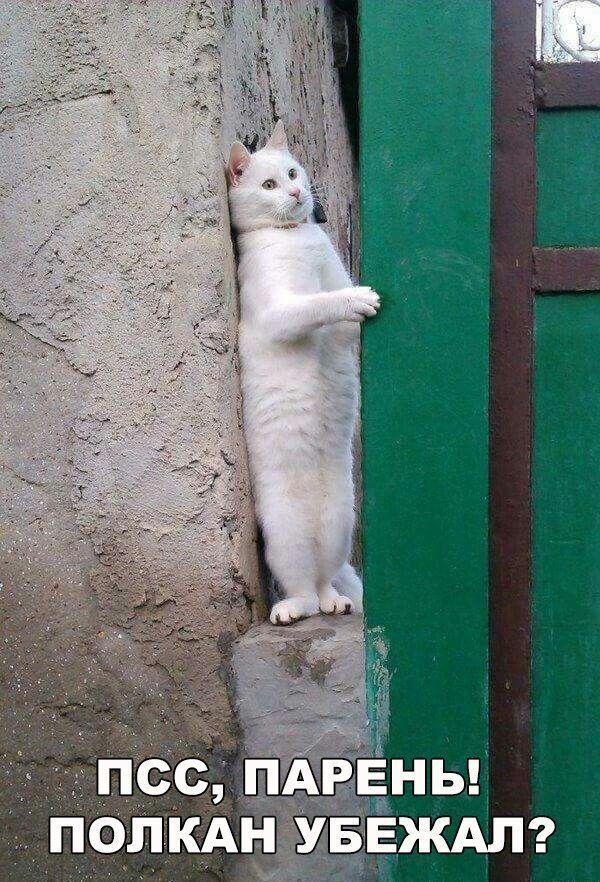Раскрыт секрет известного мема с котом и доберманами