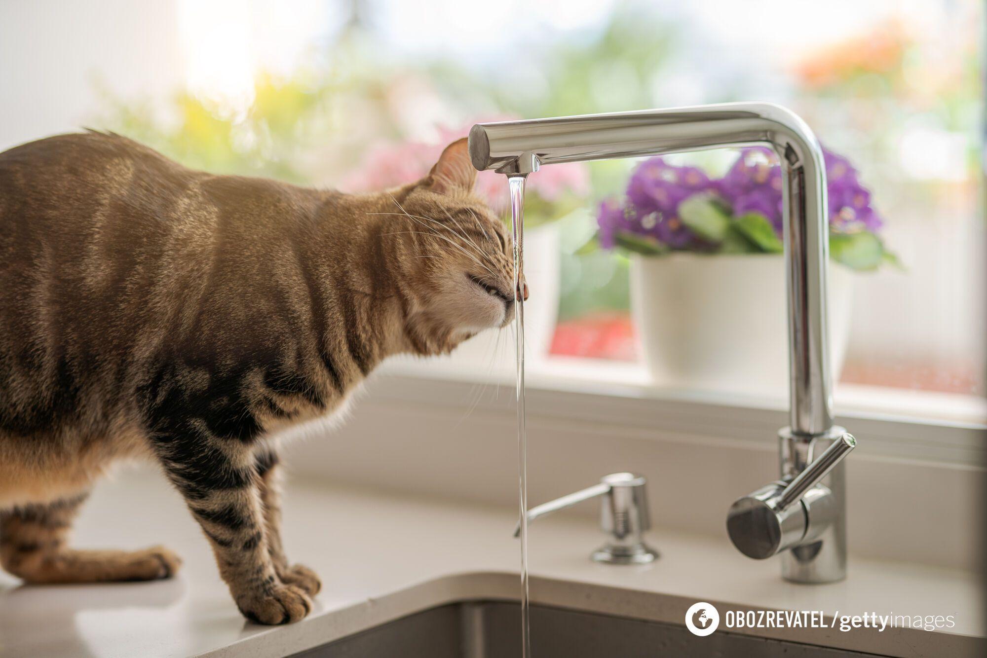 Очищенная вода – идеальный вариант для начала дня