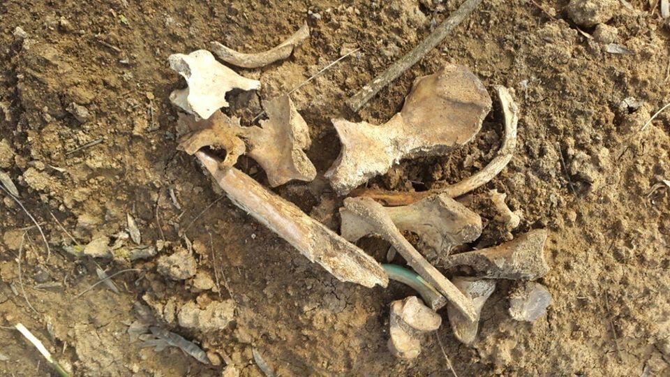 В одеському парку виявили людські кістки