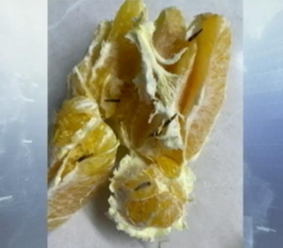 Апельсин із хробаками