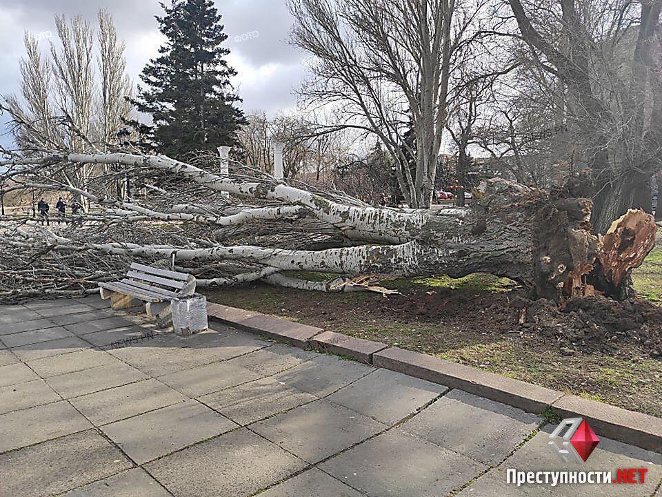 Повалені дерева в Миколаєві