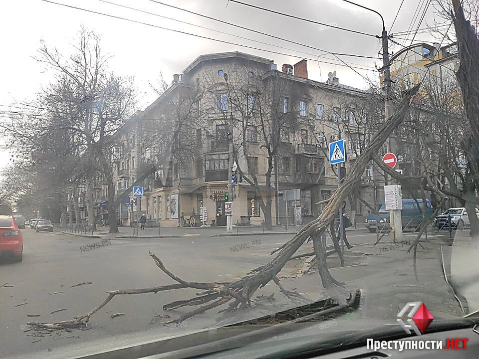 Поваленные деревья в Николаеве