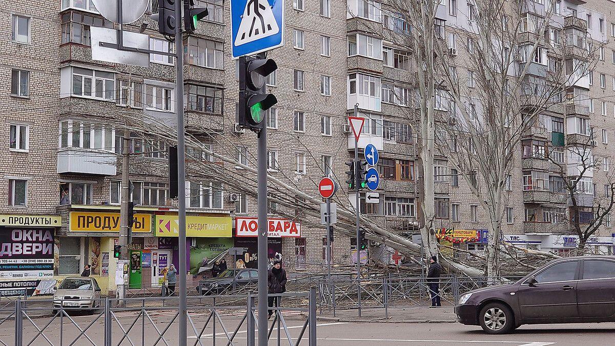 Повалені дерева у Миколаєві