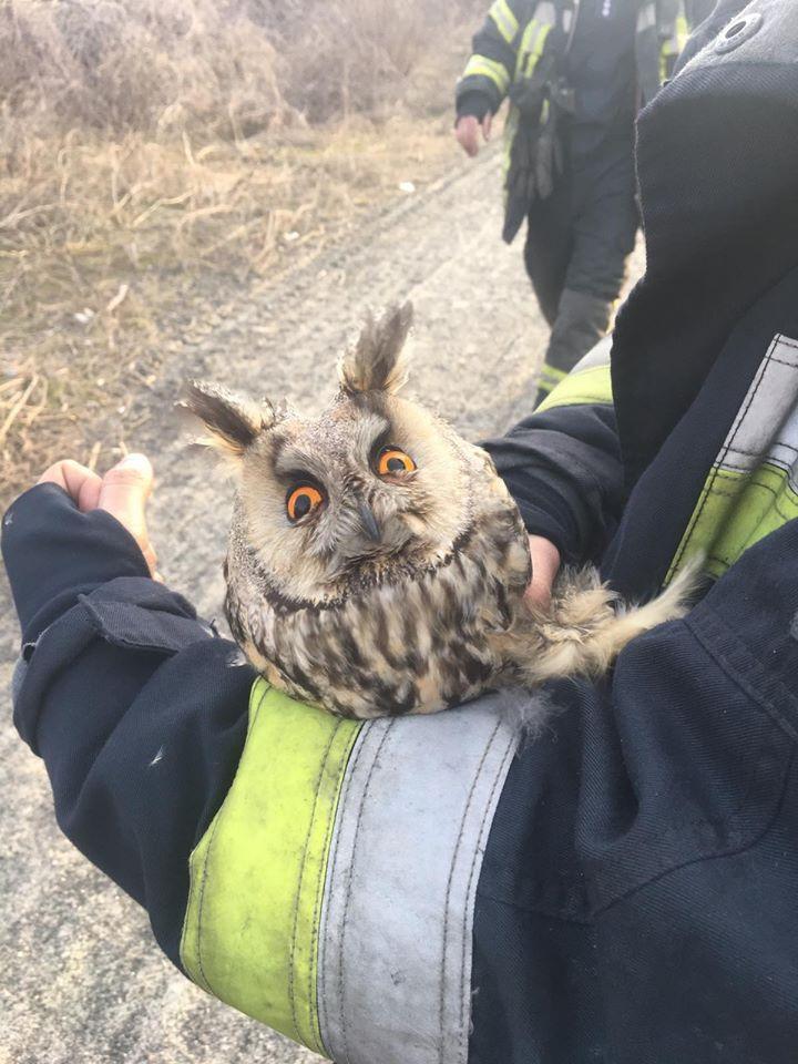 В Днепре пожарные спасли сову