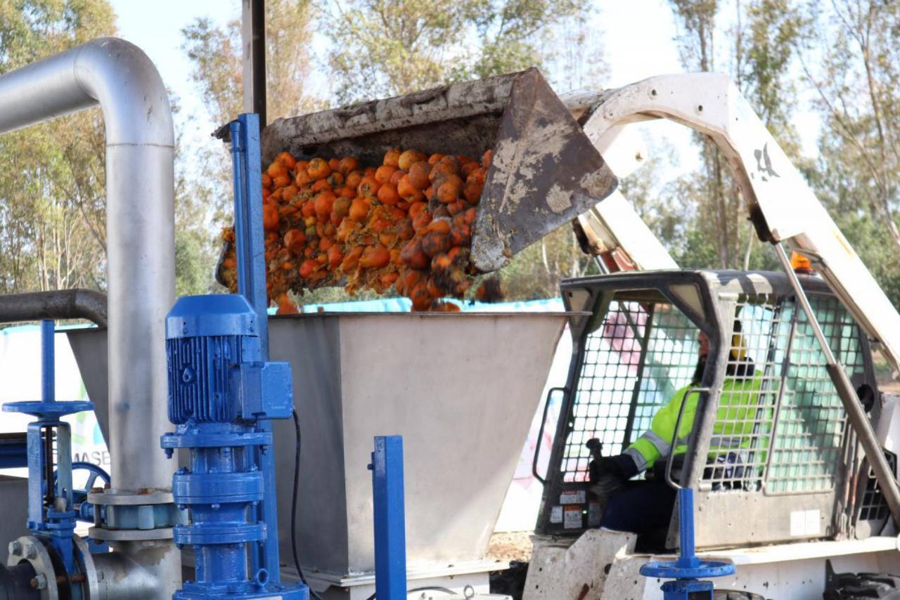 Виробництво біогазу з апельсинів