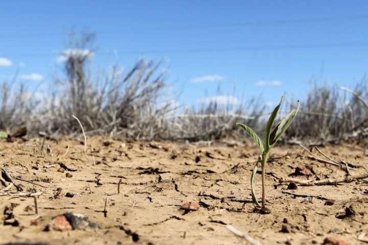 В Украину может прийти засуха