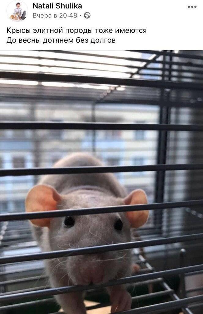 Крыска спасет от холодов